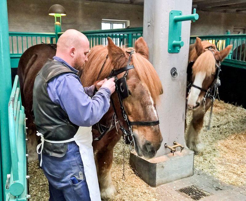 Carlsberg_horses_3_kiviluoma_2015